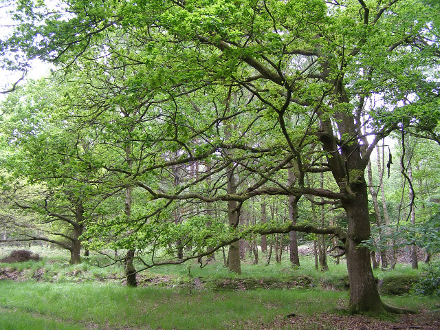 Woodland on the Hamptworth Estate