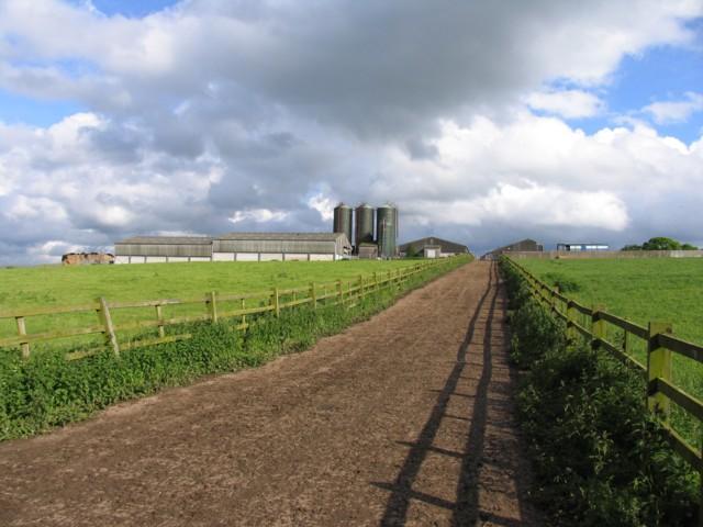 Cattle Walkway