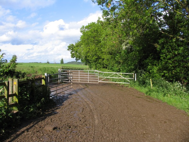 Cattle walkway and gates