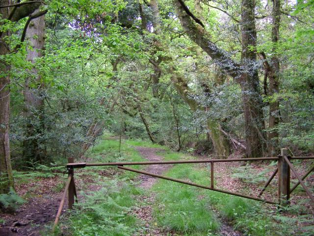 Bridleway gate, Loosehanger Common