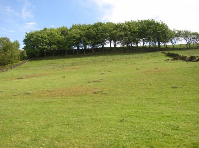 Field off Turley Cote Lane, Old Lindley