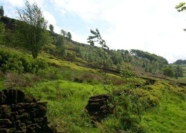 Old Lindley Moor