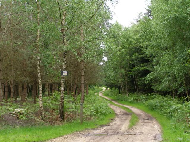 Track through Burnt Ground Wood