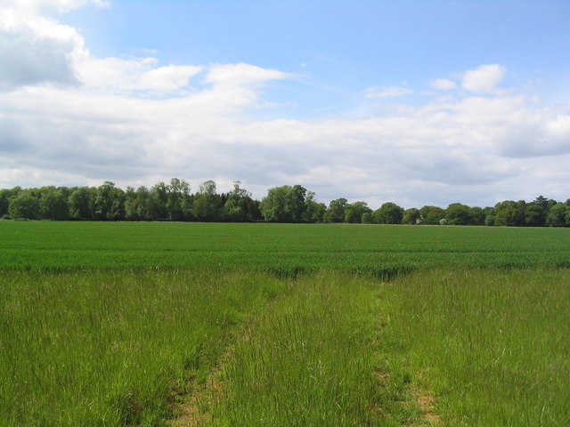 Woods of Grimsthorpe Estate from Hale House Road