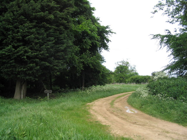 Track past Kennel Plantation, Grimsthorpe Estate