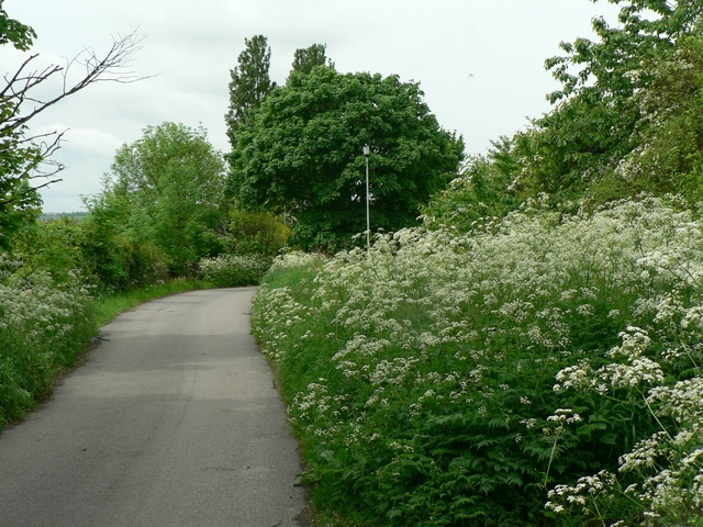 Where the cow parsley skirts the hawthorn hedge