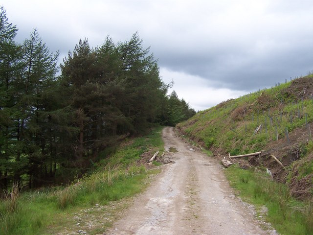 Plantation track below Sharp Haw