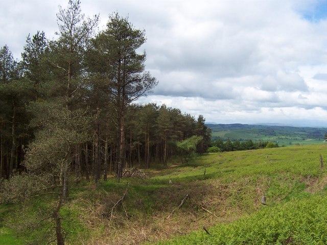 Plantation above Thorlby Springs