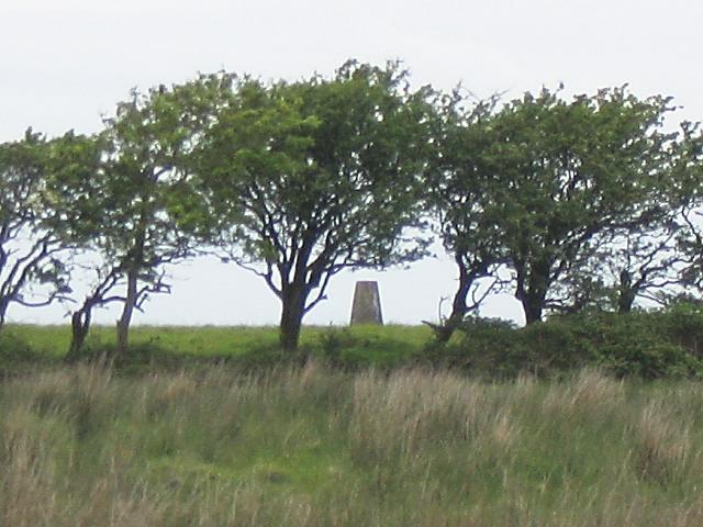 Trig pillar on Pembrey Mountain