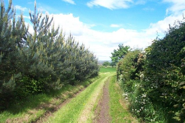 Bridleway near Peafield Lane