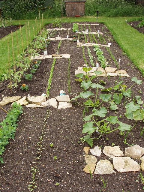 Student vegetable plot, Kew Gardens