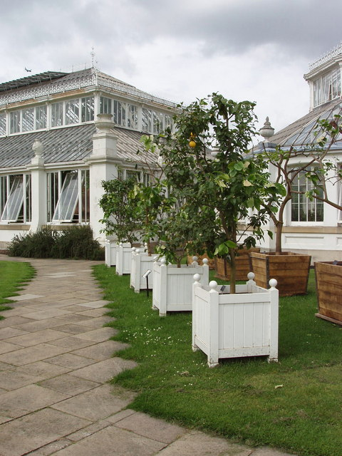 Citrus tree collection, Kew Gardens