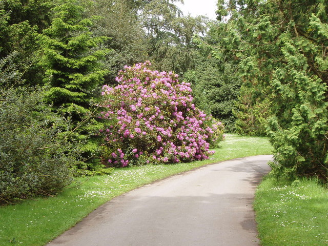 Rhododendron and trees, Conservation area, Kew Gardens