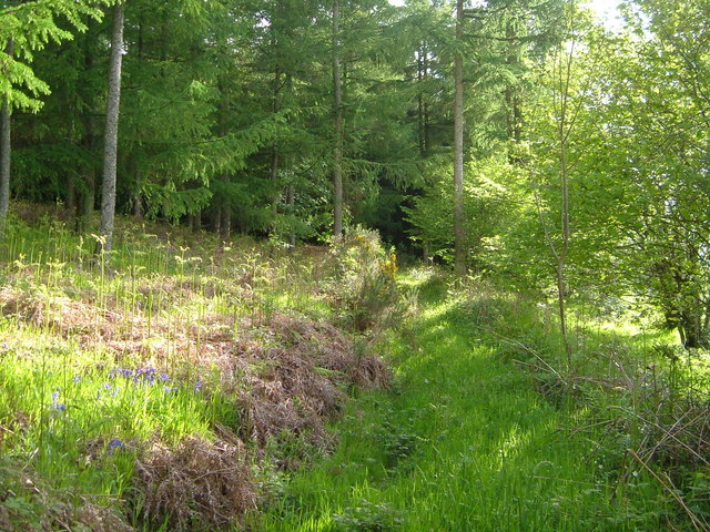Track through woodland near Blackingstone Rock