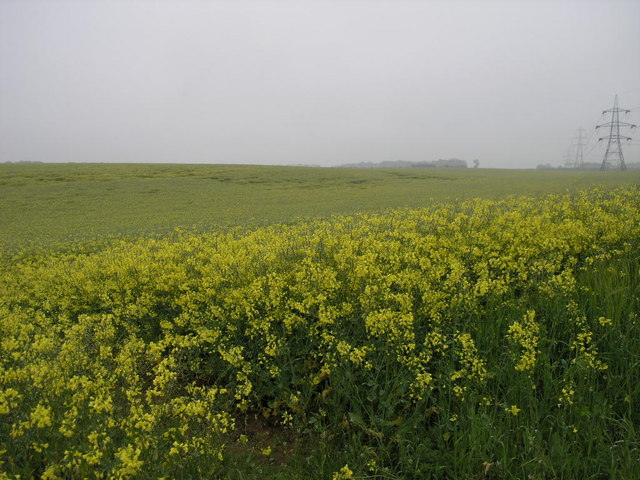Yellow Field Grey Sky