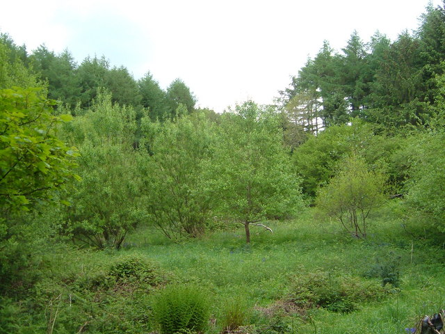 View near Smithacott