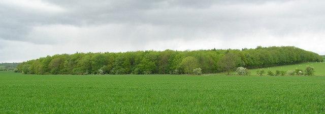 Houghton Plantation.