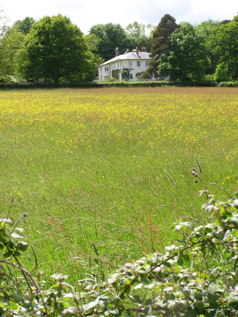 View towards The Lodge, Beaulieu Estate