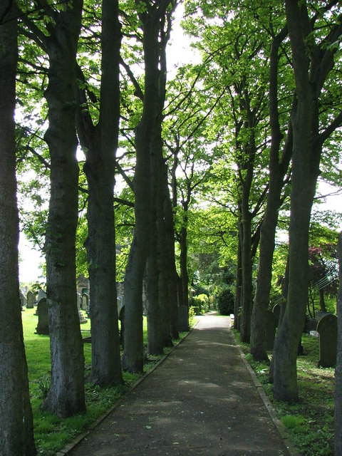 Sycamore Lined Walkway