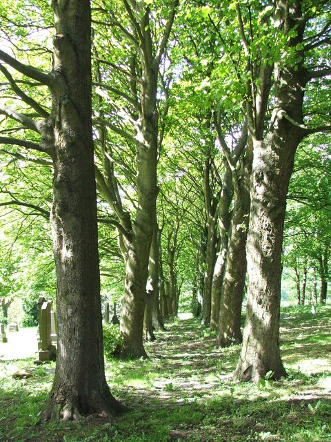 Another Sycamore Lined Walkway