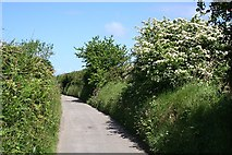 SW6738 : A Narrow Country Lane by Tony Atkin