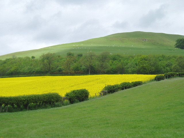 Pasture and rape field