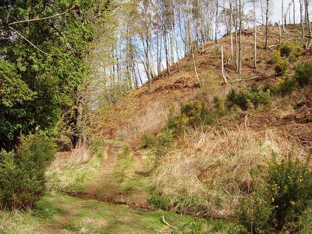 Robin Tup's Plantation