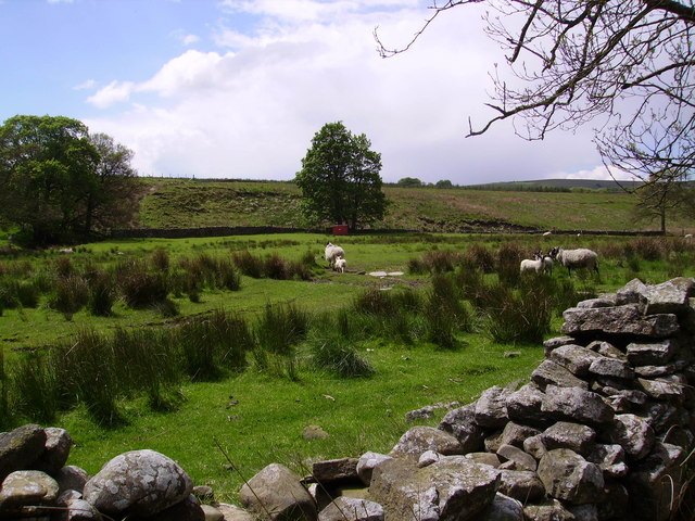 Sheep and Lambs at Bottoms