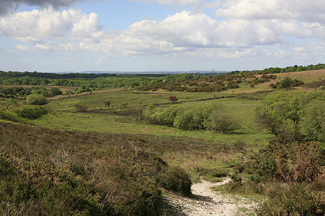 View from Picket Post, New Forest
