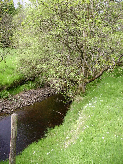 White Campions Bottoms Beck