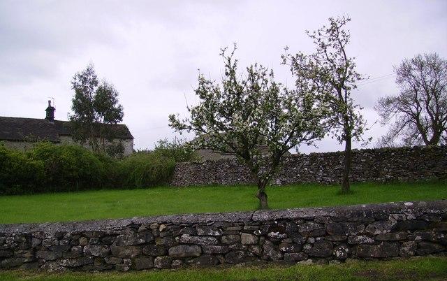 Apple Tree Lawkland