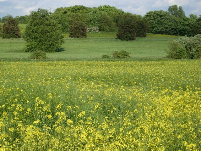 Farmland south of Saxmundham