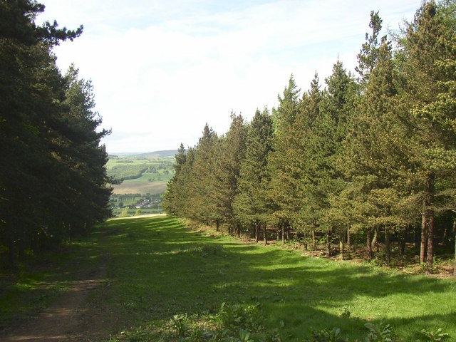 Fire break, Chevin Country Park, Otley