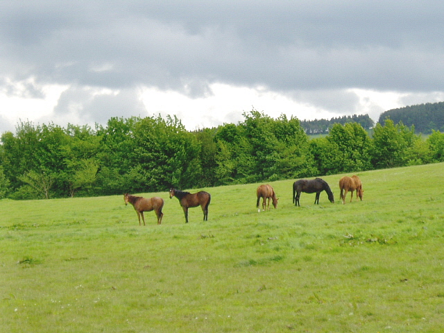 An equine line-up
