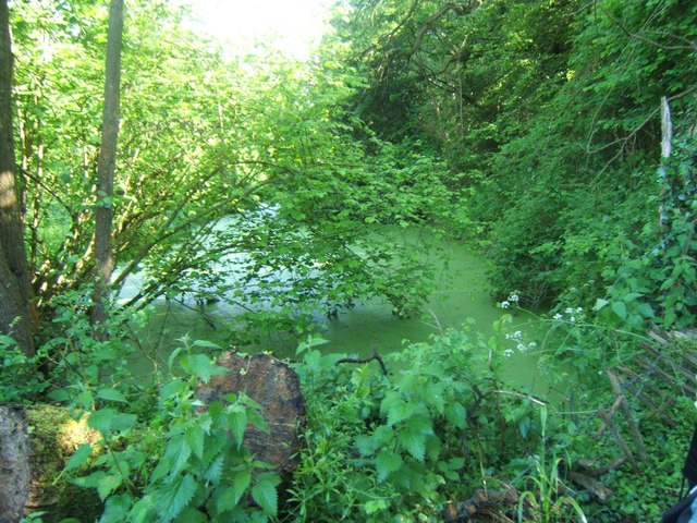 Wey and Arun Canal near Bramley