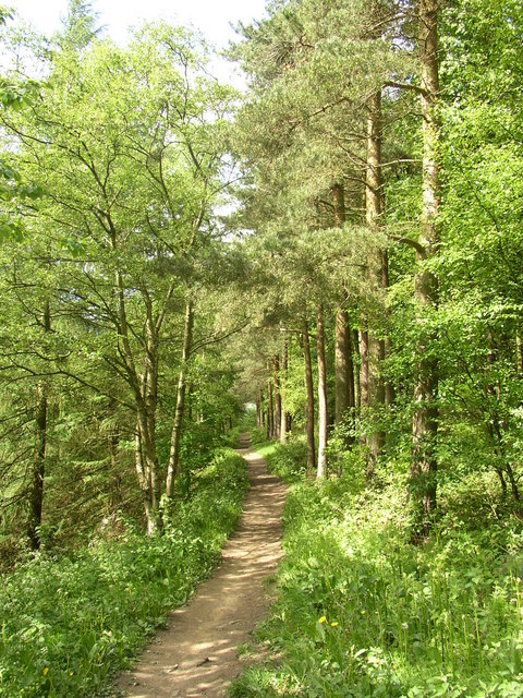 Woodland path, Chevin Country Park, Otley