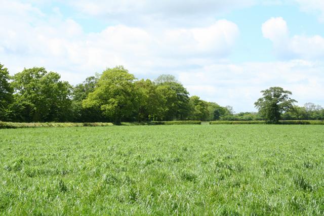 Uffculme: near Leigh Cross