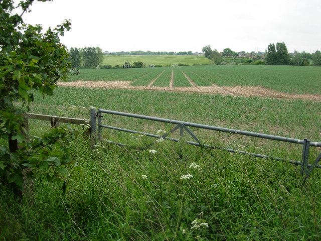 Farmland north of Leiston