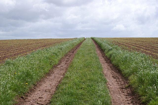 Lammaston Farm Fields
