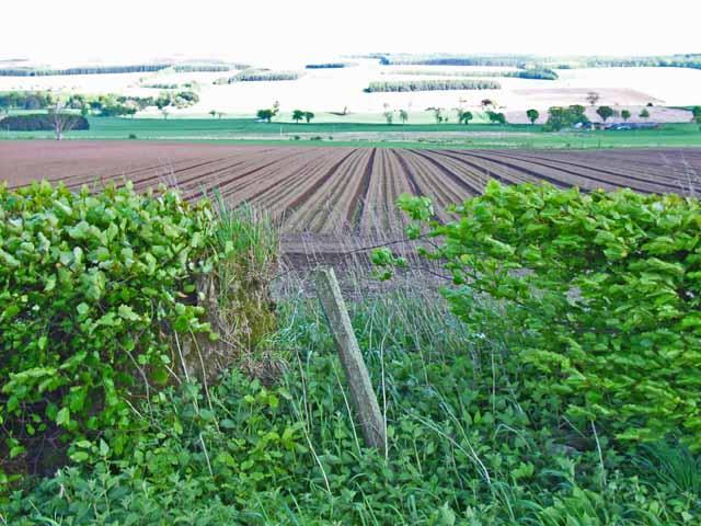 Field near Ardler