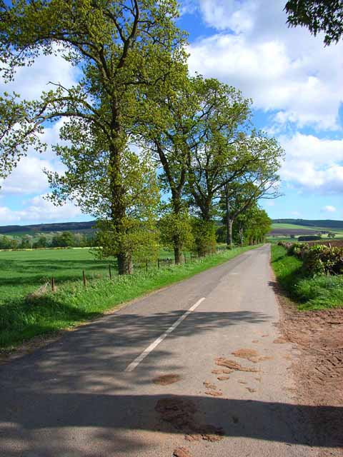 Tree-lined road from Ardler to Keillor