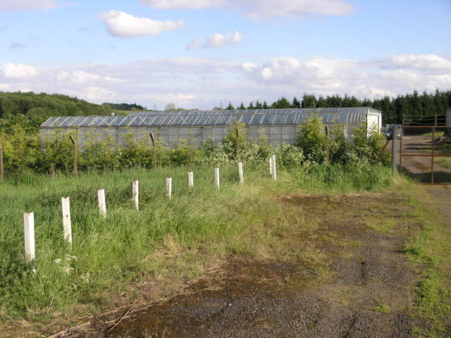 Greenhouse and Polytunnels