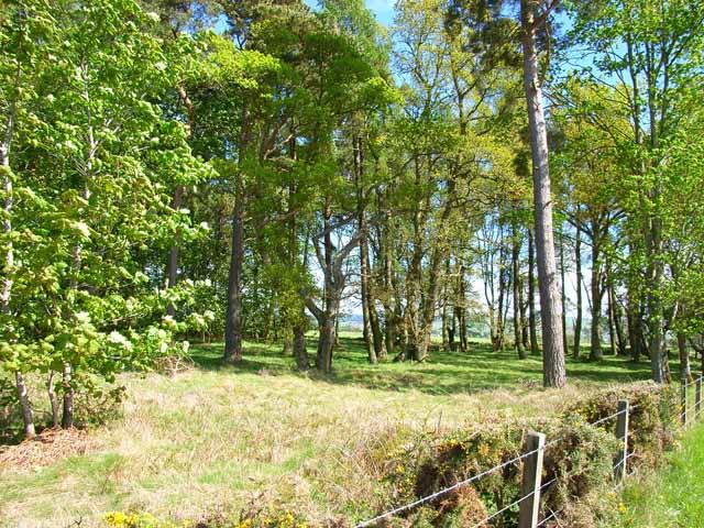 Woodland near Ruthven