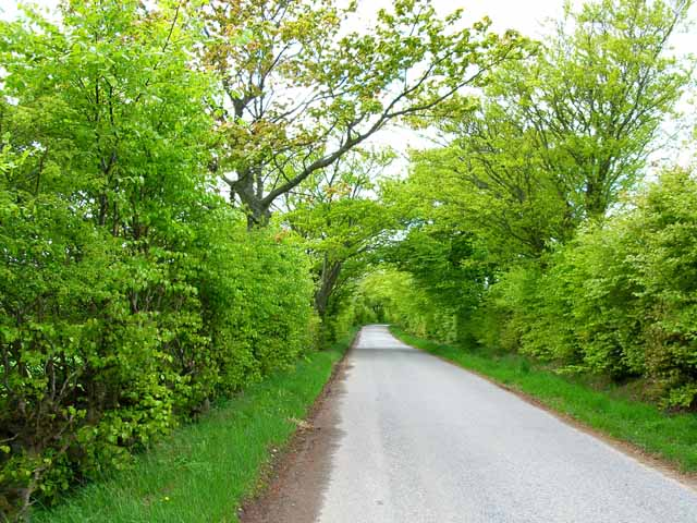 Tree-lined road near Milton of Dellavaird