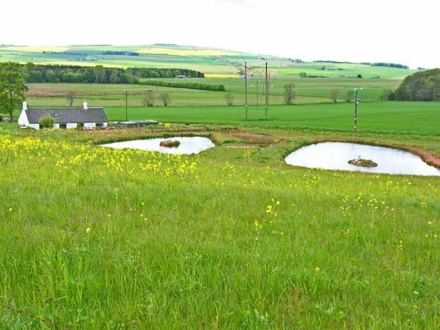 Ponds at Alpity Cottage
