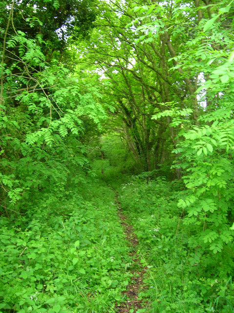 Bridleway, Eleven Acre Wood