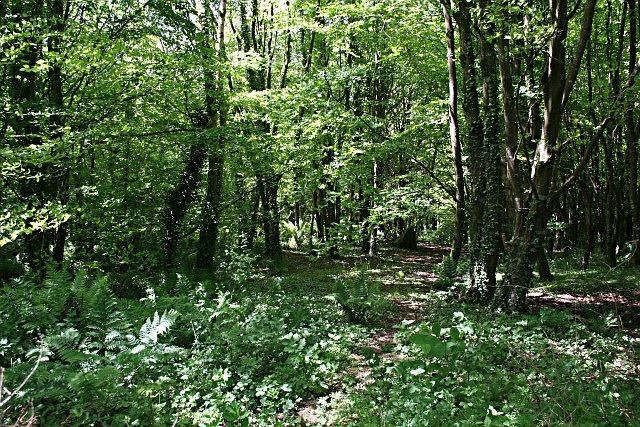 Deciduous Woodland near Stennack