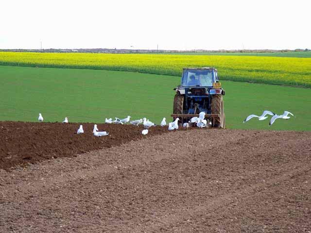 Follow the plough