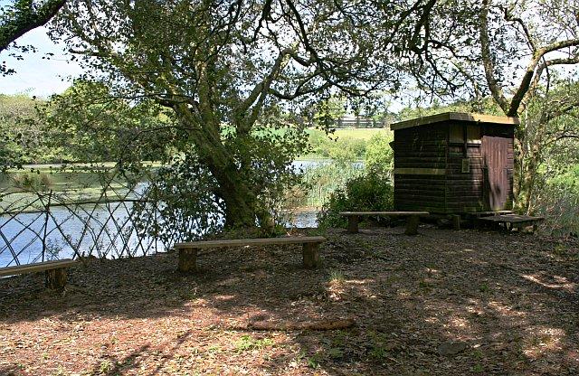 Birdwatcher's Hide, Pendarves Wood