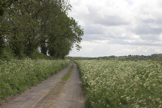 Aislaby Carr Lane